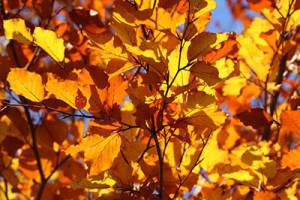 Blog - img - Transitioning to Autumn